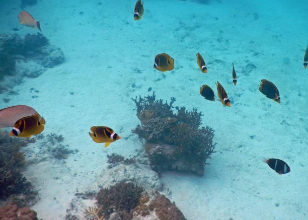 View of fish underwater stock photo