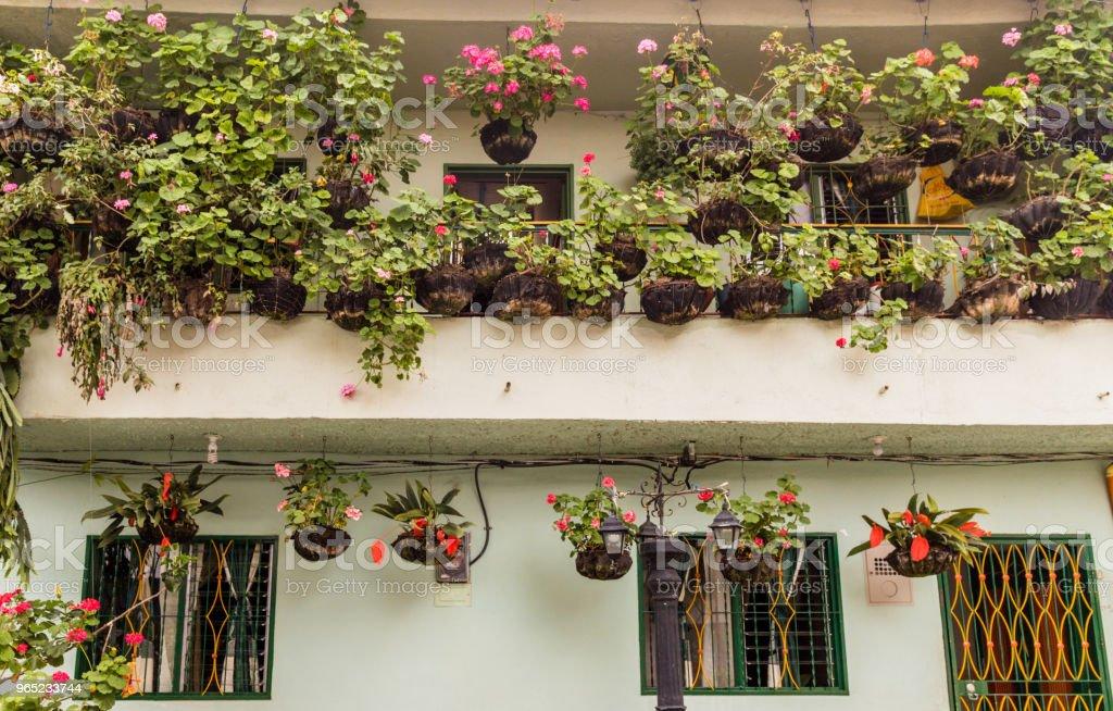A view of flowers on a balcony, Colombia. zbiór zdjęć royalty-free