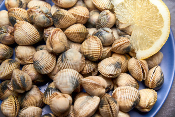 view of fresh cockles on a plate stock photo