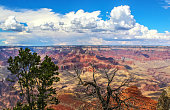 View of Grand Canyon with dead tree branches in foreground - selective focus