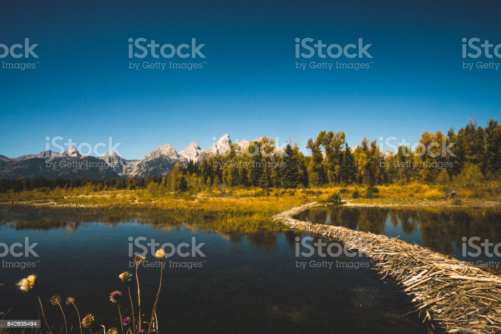View of Grand Teton from Schwabacher Landing with a beaver dam in the foreground.. stock photo