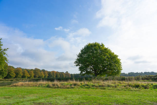 View of green fields and trees in Wimbledon Common Park using as nature background or wallpaper. stock photo