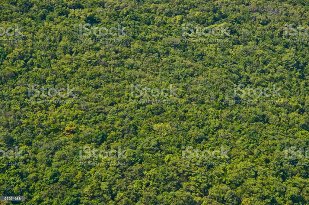 View of green forrest on mountainside stock photo