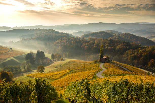 view of green mountains.  heart among vineyards - slovenia foto e immagini stock