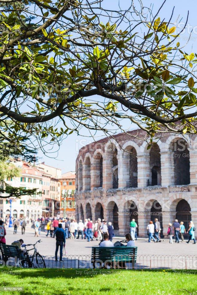 Blick auf grünen Ast und römische Arena – Foto