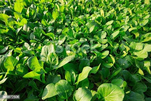 view of green vegetable garden
