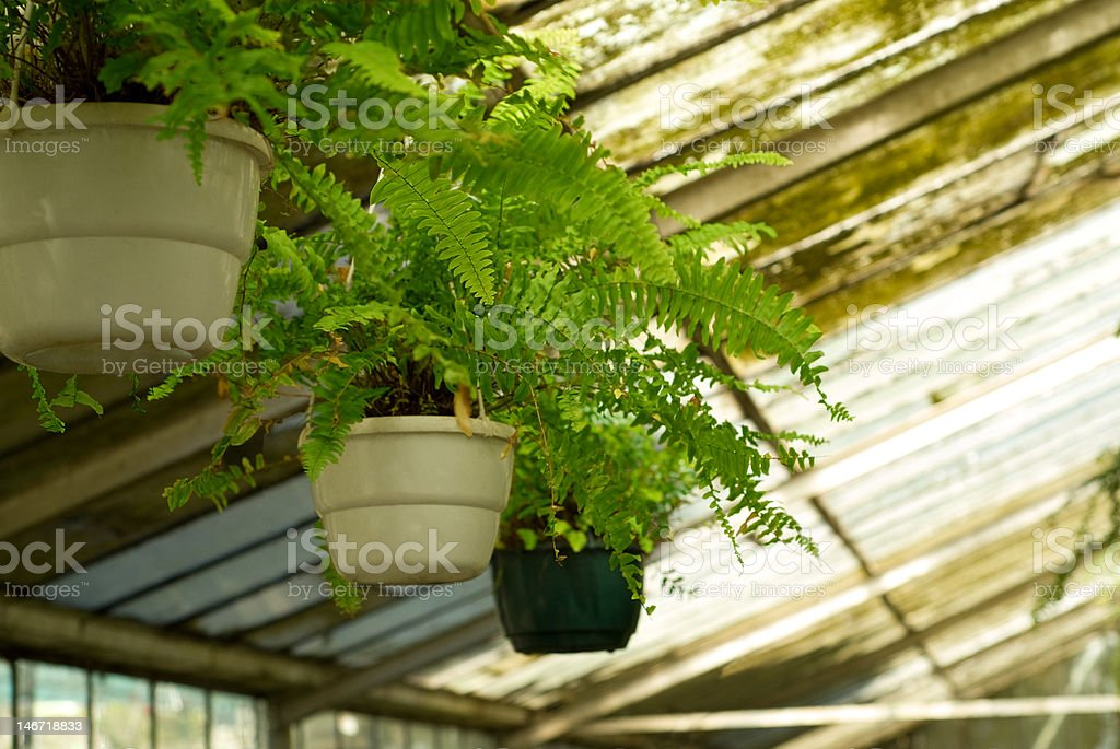 View of Greenhouse Plants at Nursery royalty-free stock photo