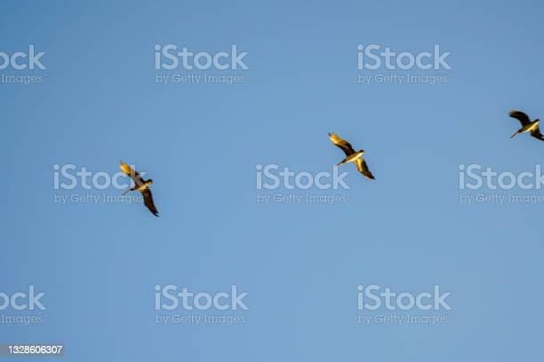 Photo of View of gull birds flying over Baker Beach in San Francisco