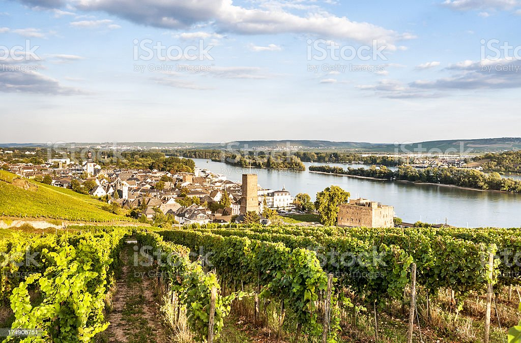 View of homes, vineyards, and lake in Reudesheim, Germany stock photo