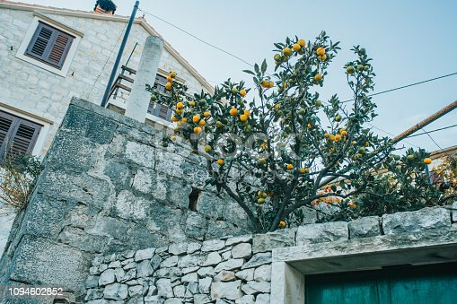 View of lemon house and tree with fruits,Croatia