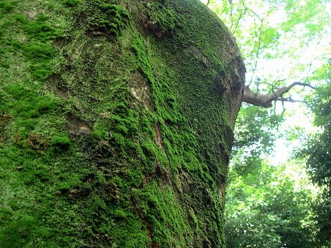 下の角度からの巨大な木の眺め - エコツーリズムのストックフォトや画像を多数ご用意