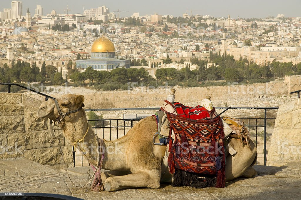View of Jerusalem old city with a Camel royalty-free stock photo