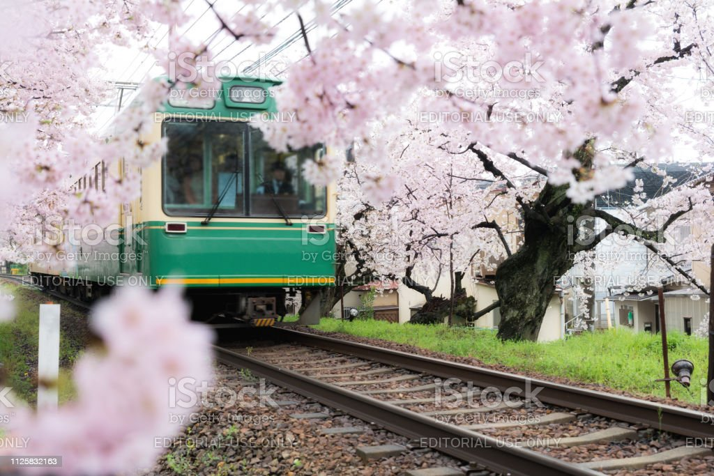 View of Kyoto local train traveling on rail tracks with flourishing cherry blossoms along the railway in Kyoto, Japan stock photo