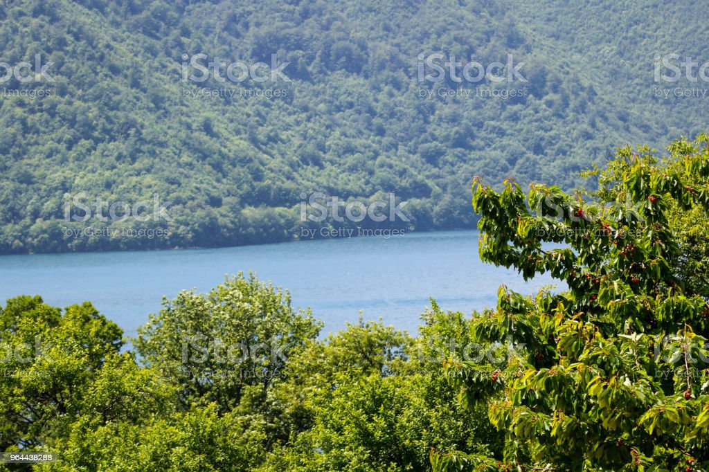 View Of Lake In Forest - Royalty-free Beauty Stock Photo
