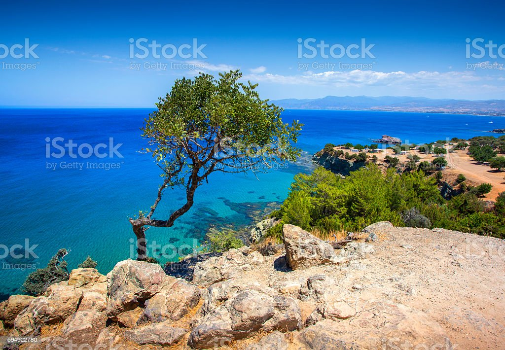 view of lonely tree stock photo