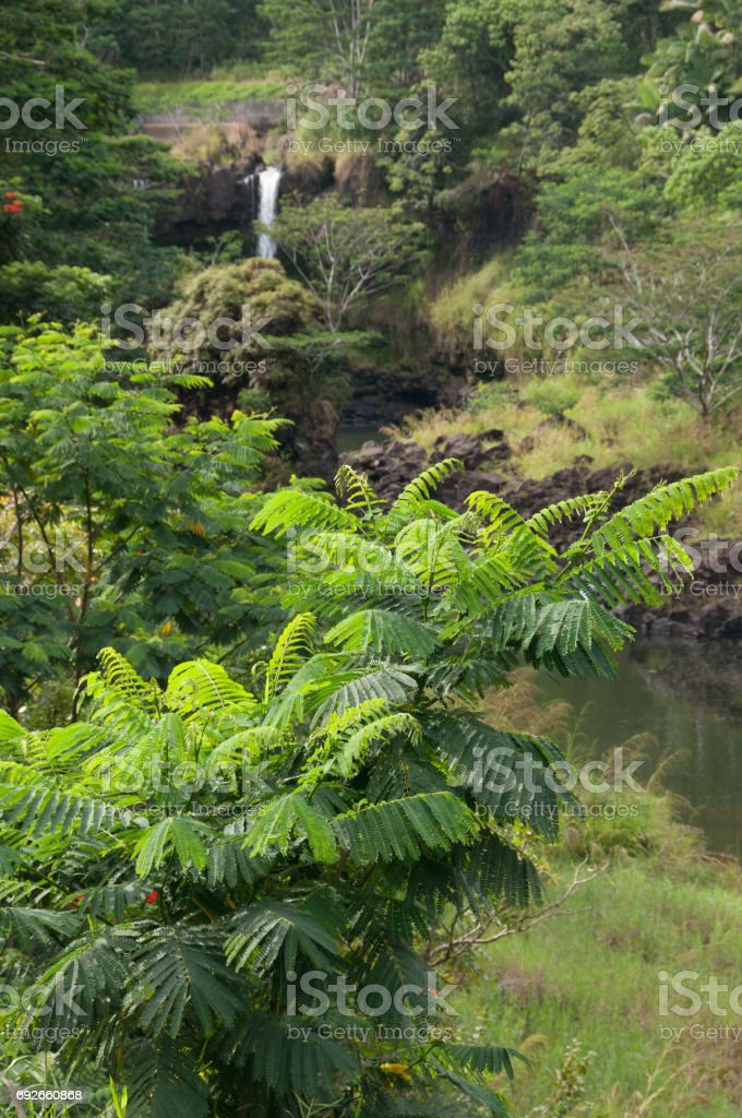 A view of lush foliage with Rainbow Falls in the distance. stock photo