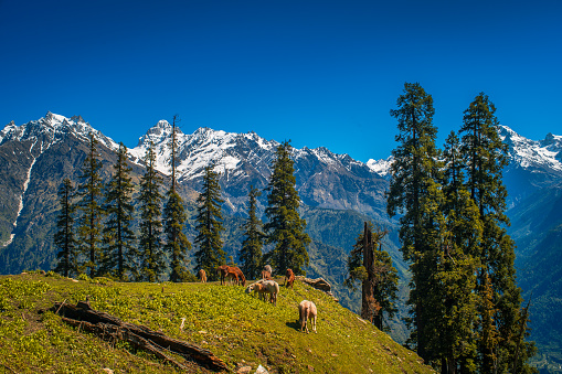 Landscape in the mountains. View of Majestic Himalayan mountains in Parvati Valley, Himachal Pradesh, India.