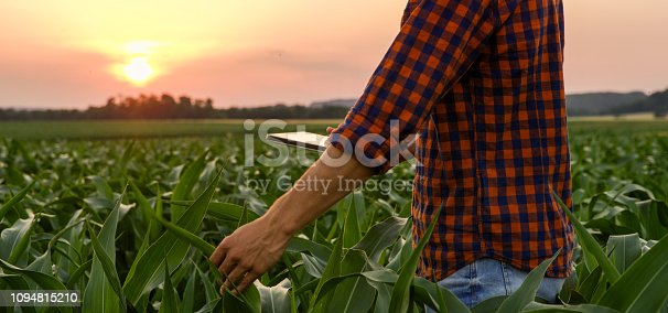 View of man on corn field with digital tablet on his hand