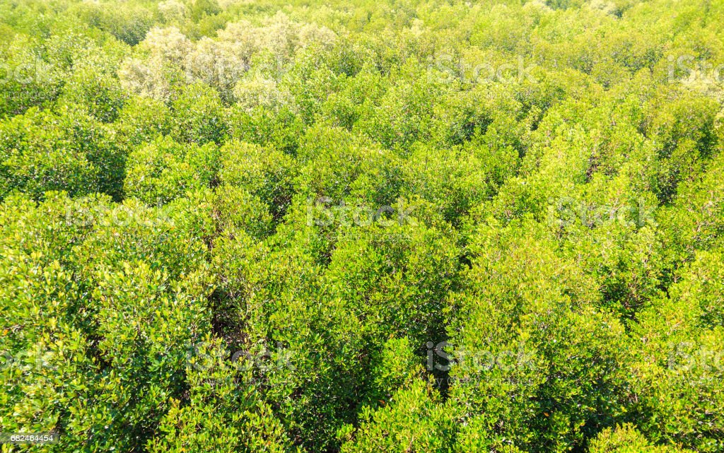 view of mangrove forest from above royalty-free stock photo