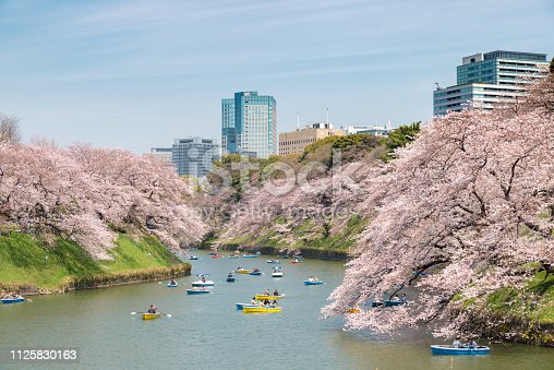 View of massive cherry blossoming in Tokyo, Japan as background. Photoed at Chidorigafuchi, Tokyo, Japan.