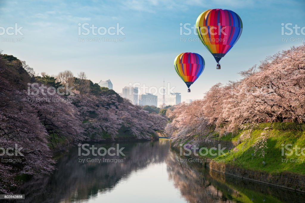 View of massive cherry blossoming in Tokyo, Japan as background. Photoed at Chidorigafuchi, Tokyo, Japan. stock photo