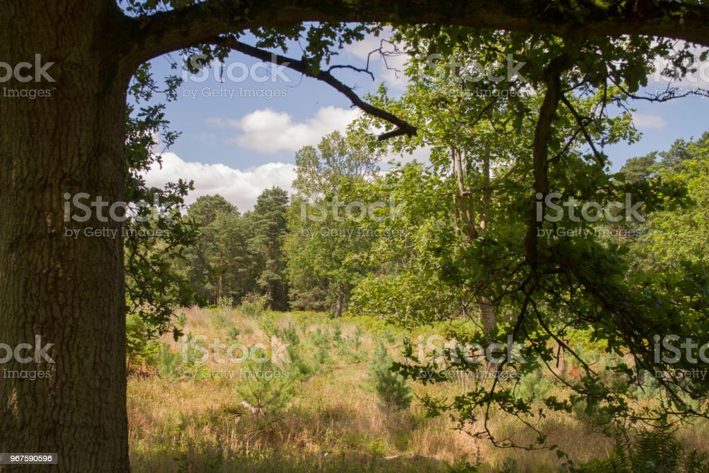 View of meadow framed by trees stock photo