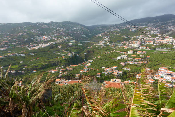View of Miradouro da Torre viewpoint of the atlantic coastline with banana trees in Câmara de Lobos, Madeira View of Miradouro da Torre viewpoint of the atlantic coastline with banana trees in Câmara de Lobos, Madeira ilha da madeira stock pictures, royalty-free photos & images