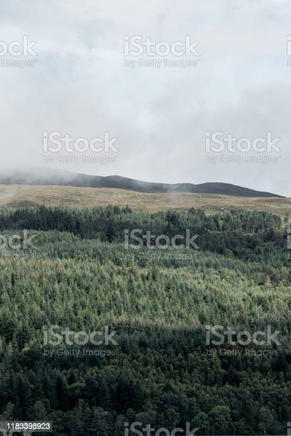 View of mist and forest from loch ness in scotland picture id1183398923?b=1&k=6&m=1183398923&s=612x612&h=qpzzoxmeznn51icquqwtfl0zizhsp8 prqxnkqm1pqw=