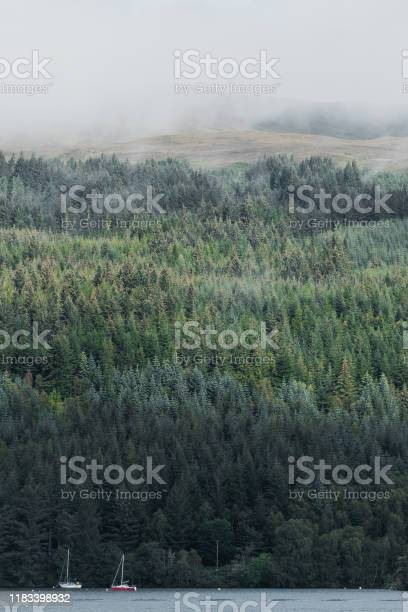 View of mist and forest from loch ness in scotland picture id1183398932?b=1&k=6&m=1183398932&s=612x612&h=v htpg1juaerjbuk  2sxxmol8lguf2fr7q jlwxun4=