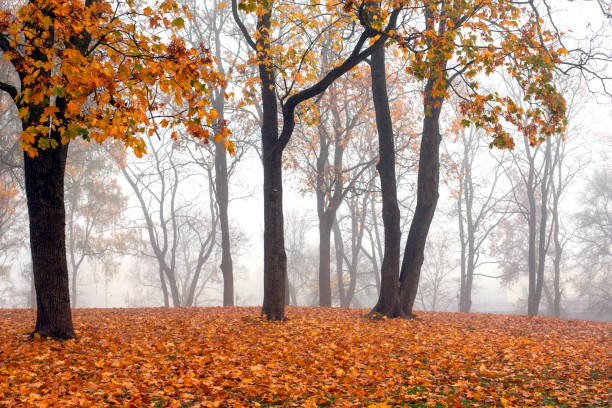 View of misty autumn park  with fallen leaves stock photo