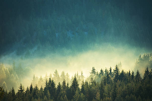 view of misty fog mountains in autumn - trees in mist stock pictures, royalty-free photos & images