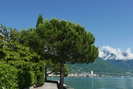 View of Montreux from Clarens shoreline