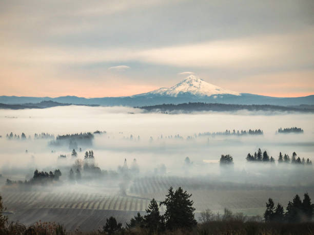View of Mount Hood from Oregon Wine Country A view of snowy Mount Hood from high above vineyards in the Willamette Valley of Oregon mt hood stock pictures, royalty-free photos & images