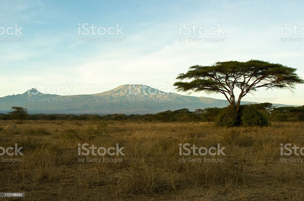 View of Mount Kilimanjaro with thorn tree in the foreground stock photo