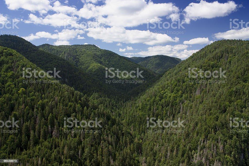 Vista para montanhas - Foto de stock de Bosque - Floresta royalty-free