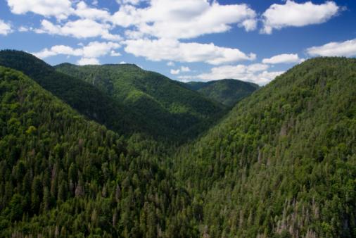 Foto de Vista Para Montanhas e mais fotos de stock de Bosque - Floresta