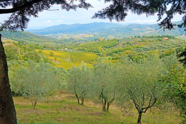Blick auf Olive Bäume aus von Panzano, Italien übersehen – Foto