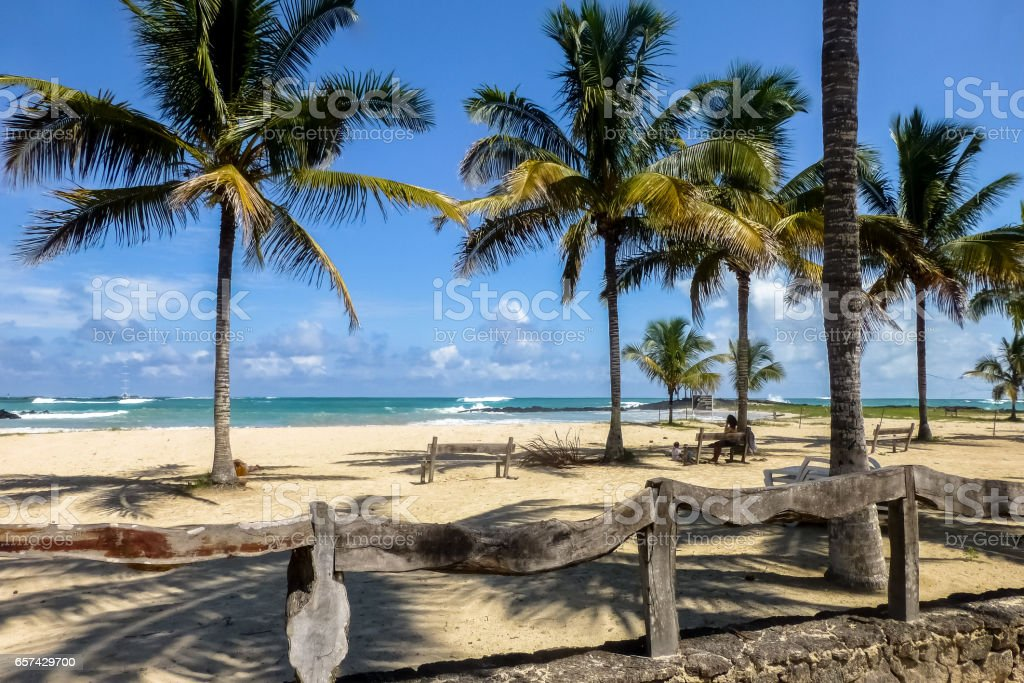 View of palm-fringed beach with blue sky on Isabela Island – Foto