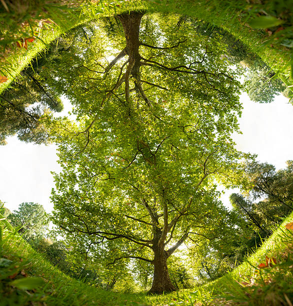 360° View of Park Tree and Grass, mirrored. stock photo