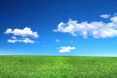 穏やかな芝生の眺め