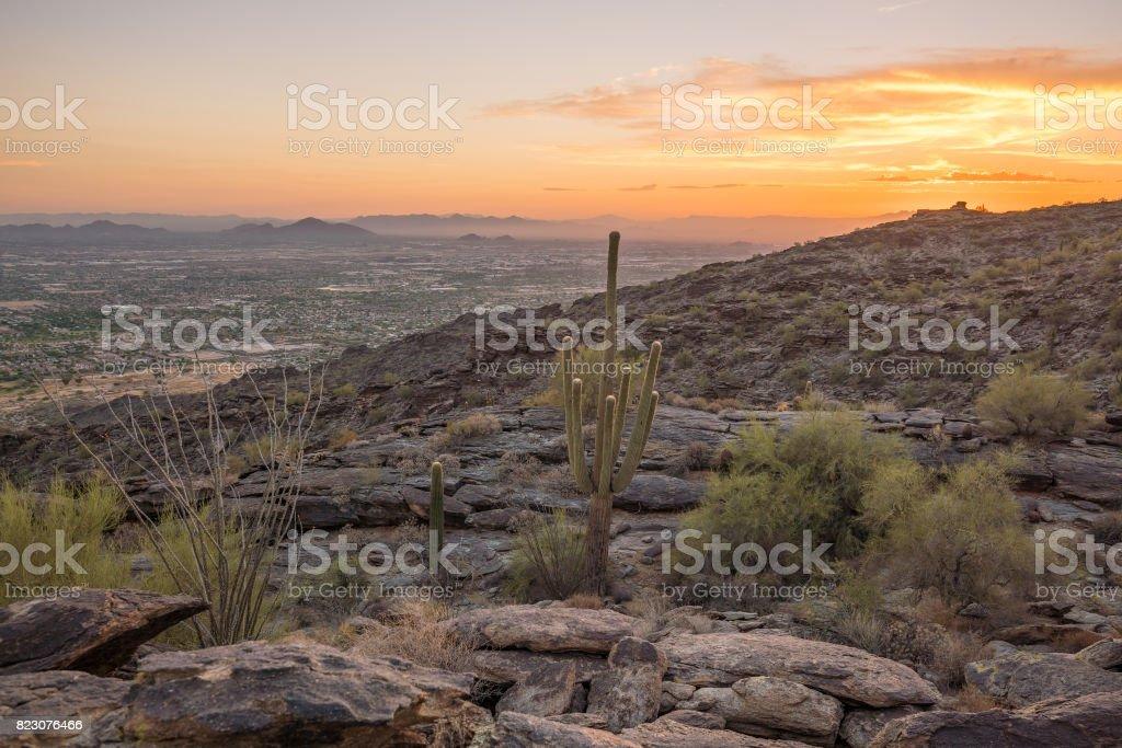 View of Phoenix with  Saguaro cactus stock photo