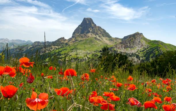 fransızca pyrenees, pic du midi d'ossau görünümünü haşhaş alanla - bearn stok fotoğraflar ve resimler