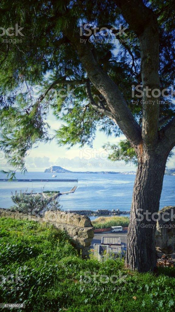 View of Pozzuoli bay with tree - foto stock