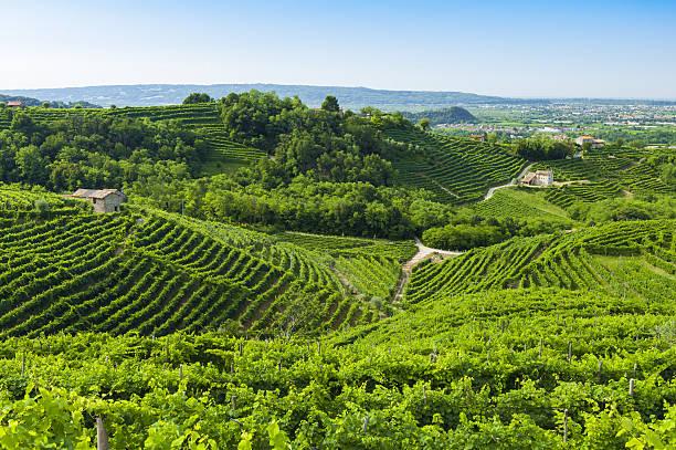 view of prosecco vineyards from valdobbiadene, italy during summ - venezien stock-fotos und bilder