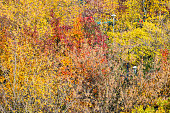 aerial view of red foliage of apple trees in city garden on sunny autumn day