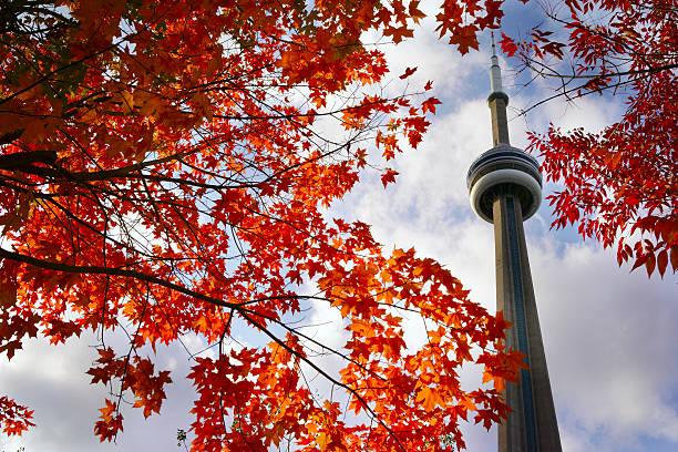 뷰 레드 단풍 나무 및 cn 타워 - 토론토 온타리오 뉴스 사진 이미지