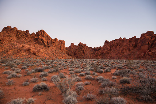 Scenic view of desert plant clumps scattered in red sand in the Valley of Fire, Nevada