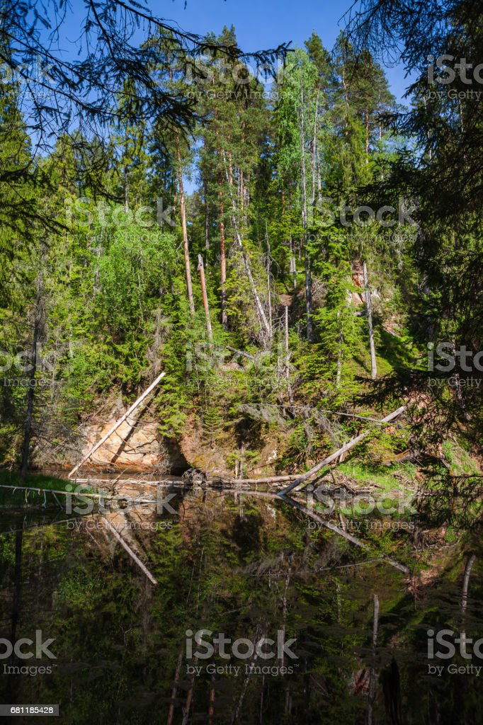 View of river Gauja green bank with reflection in the water. Gauja National park, Latvia. royalty-free stock photo
