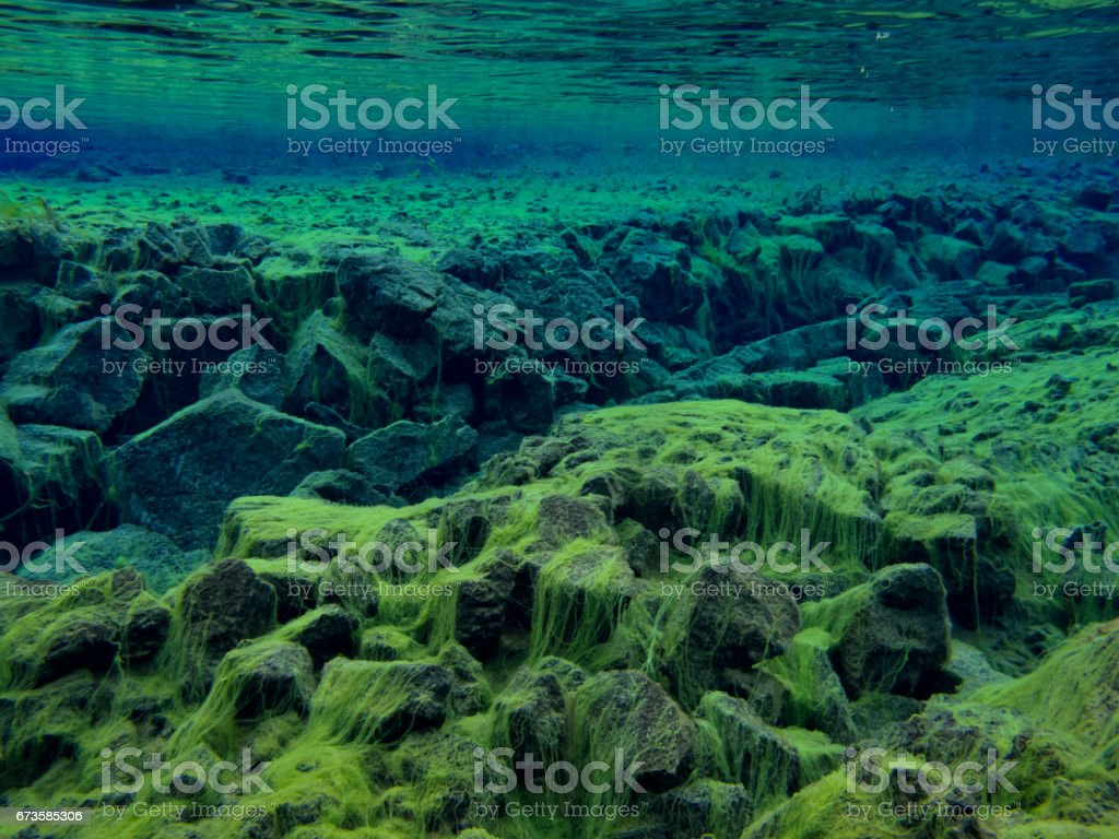 View of Rocky Divide Covered in Green Carpet Algae in Continental Split at Silfra in Shallow Section at Pingvellir National Park 1 stock photo