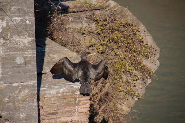 view of rome, tibre. - batalina italy стоковые фото и изображения